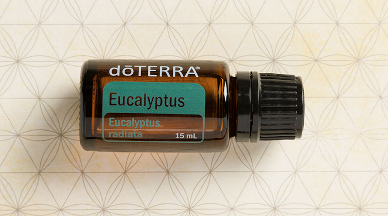 eucalyptus essential oil doterra jillwiley
