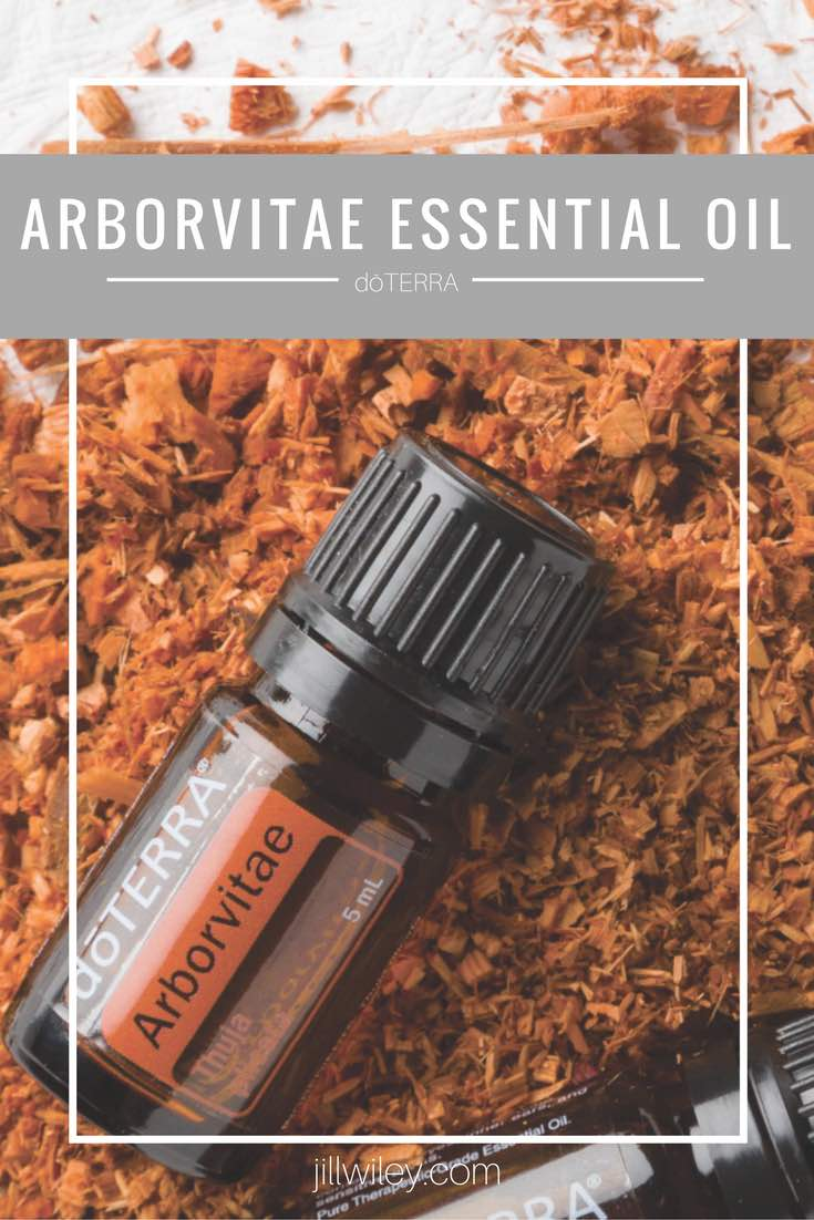 arborvitae essential oil doterra jillwiley